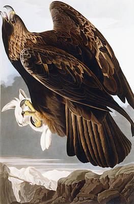 Predation Painting - Golden Eagle by John James Audubon