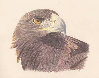 Drawing - Golden Eagle Study by Sheila Byers