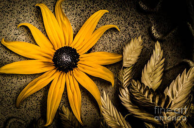 Photograph - Golden Evening Flower by Michael Arend