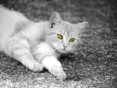 Golden Eye Cat Photograph - Golden Eyes by Jai Johnson