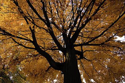 Photograph - Golden Fall by Mike Lanzetta