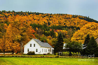 Photograph - Golden Farm by Rick Bragan