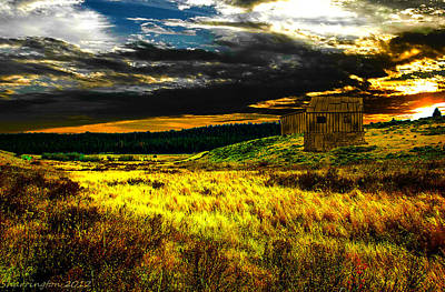 Photograph - Golden Field Mixed by Shannon Harrington