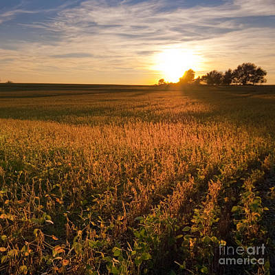 Photograph - Golden Fields by Ryan Heffron