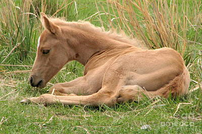 Photograph - Golden Filly by Frank Townsley