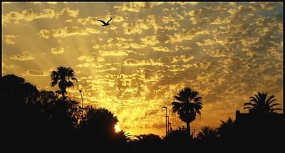 Giornata Photograph - Golden Flight by Renato Sensibile