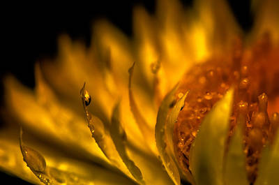 Photograph - Golden Flower Golden Glory by Tin Lung Chao