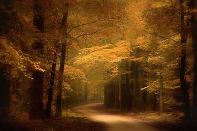 Fall Photograph - Golden Forest by Erwin Stevens