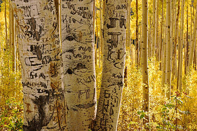 Photograph - Golden Forest Of Aspen Trees No.2 by Daniel Woodrum