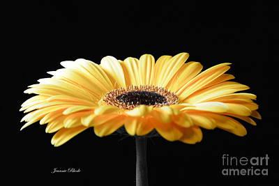 Golden Gerbera Daisy No 2 Art Print