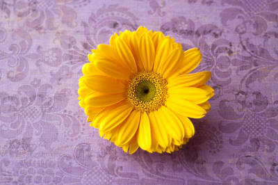 Gerber Daisy Photograph - Golden Girl by Christi Kraft