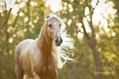 Paso Fino Horse Photograph - Golden Girl by Stephanie Moon