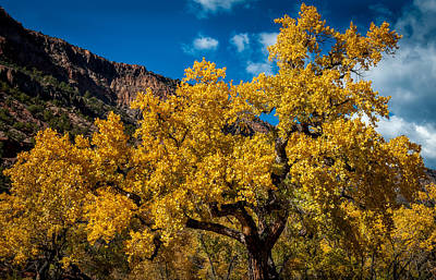 Photograph - Golden Glory by Chuck Summers