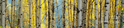 Photograph - Golden Glow Pano by Idaho Scenic Images Linda Lantzy