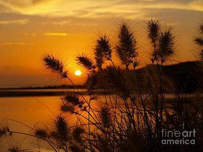Art Print featuring the photograph Golden Glow by Trena Mara