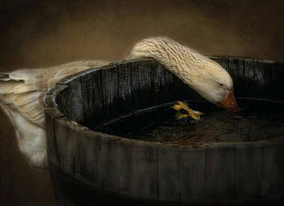 Golden Goose Art Print by Robin-Lee Vieira