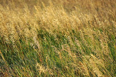 Photograph - Golden Grain Of Summer by Mary Lee Dereske