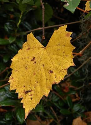 Golden Grape Leaf Original