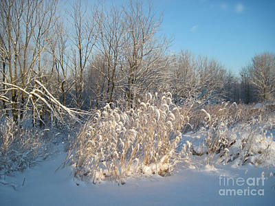 Snow Photograph - Golden Grass In Winter Sun With Snow by Conni Schaftenaar