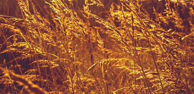 Design With Photograph - Golden Grass  by Jenny Rainbow