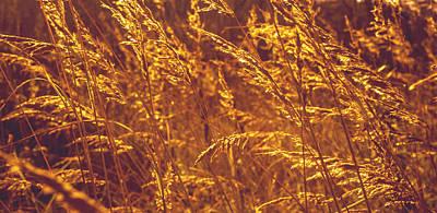 Lyrical Photograph - Golden Grass  by Jenny Rainbow