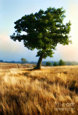 Golden Grass Of The Blue Ridge Mountains II Art Print