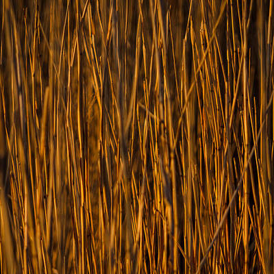 Photograph - Golden Grass by Robert Clifford