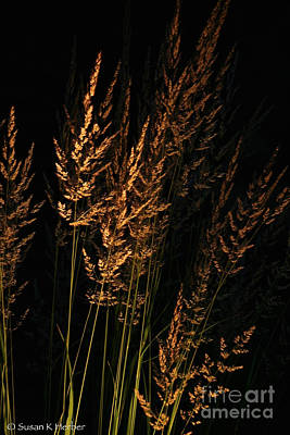 Photograph - Golden Grasses by Susan Herber