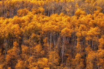 Jeff Johnson Photograph - Golden Grove by Jeff Johnson