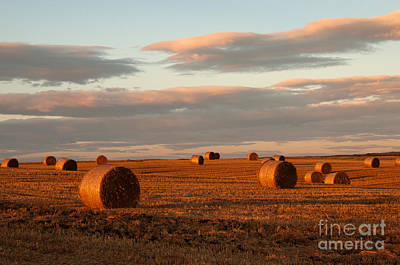 Colourfull Photograph - Golden Harvest by David  Hollingworth
