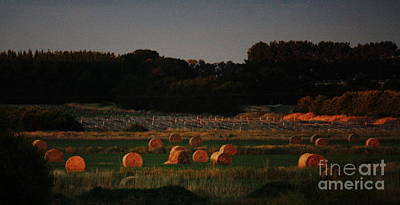 Photograph - Golden Hay Bales At Dusk by Amanda Holmes Tzafrir