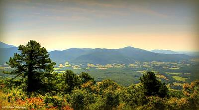 Photograph - Golden Hills  by Debra Forand