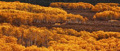 Jeff Johnson Photograph - Golden Hillside by Jeff Johnson