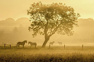 Sunrise Photograph - Golden Horses by Richard Guijt