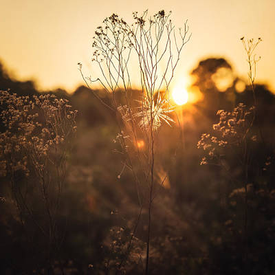 Photograph - Golden Hour  by Maria Robinson