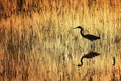 Herons Photograph - Golden Hour by Mike Lang