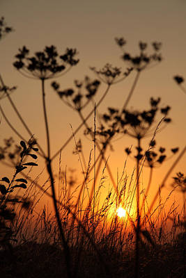 Photograph - Golden Hour by Paul Lilley