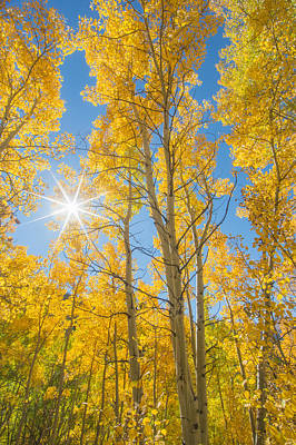 Photograph - Golden Hues Of Autumn by Colleen Coccia