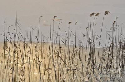 Stiff Photograph - Golden Ice by Simona Ghidini