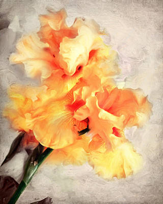 Golden Iris 1 Art Print