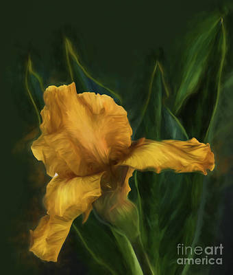 Photograph - Golden Iris by Shirley Mangini