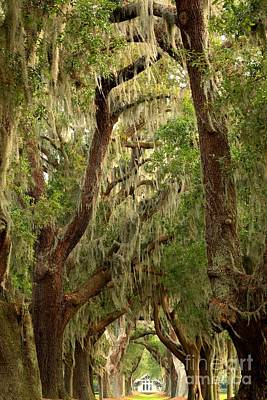 Photograph - Golden Isles Oaks by Adam Jewell