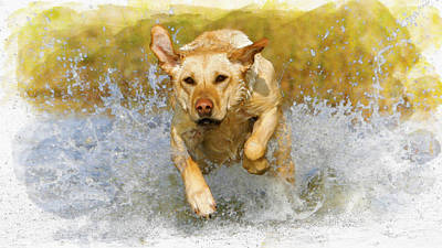 Labrador Digital Art - Golden Labrador by Don Kuing