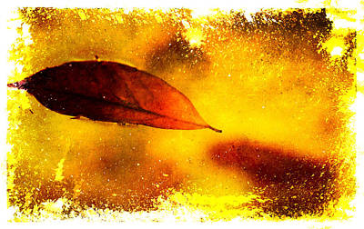 Photograph - Golden Leaf 2 by Jenny Rainbow