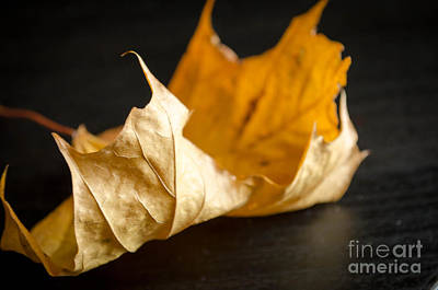 Photograph - Golden Leaf  by Andrea Anderegg