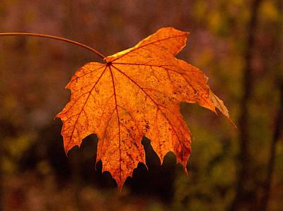 Photograph - Golden Leaf by David Frankel