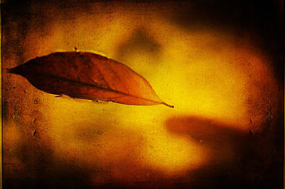 Photograph - Golden Leaf by Jenny Rainbow