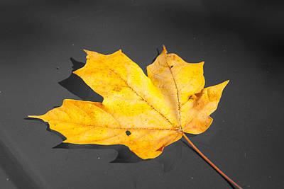 Photograph - Golden Leaf by Steve Stuller