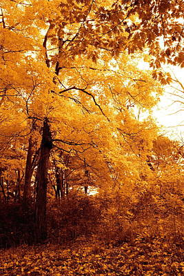 Photograph - Golden Leaves 2 by Jocelyne Choquette