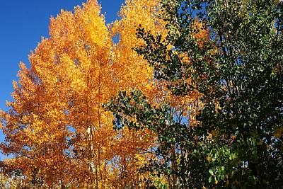 Photograph - Golden Leaves Against A Clear Blue Sky by Marilyn Burton